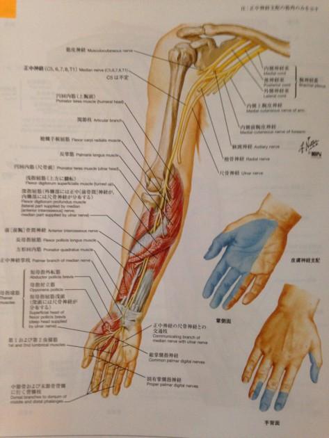 横に寝ると手のひらや足がしびれる治療方法|福岡県福津古賀宗像北九州市